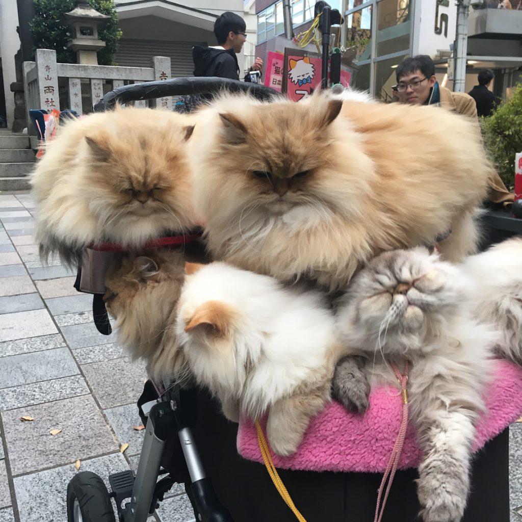 Cart Full of Cats Tokyo